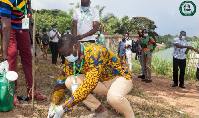 Let's plant trees to preserve traditional medicine—CPMR Boss