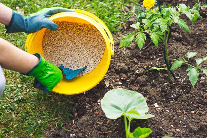 fertilizer subsidy programme